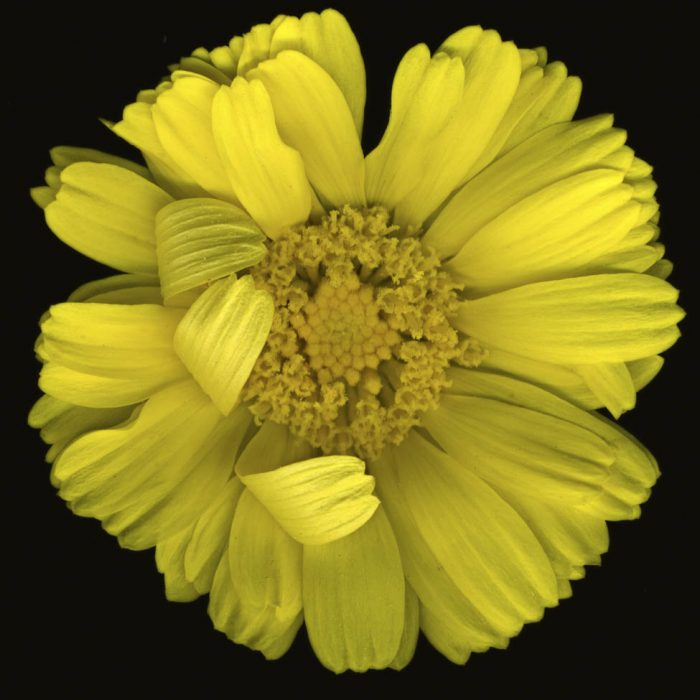 Super-sized Flower Tops