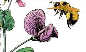 Popular Pollinators