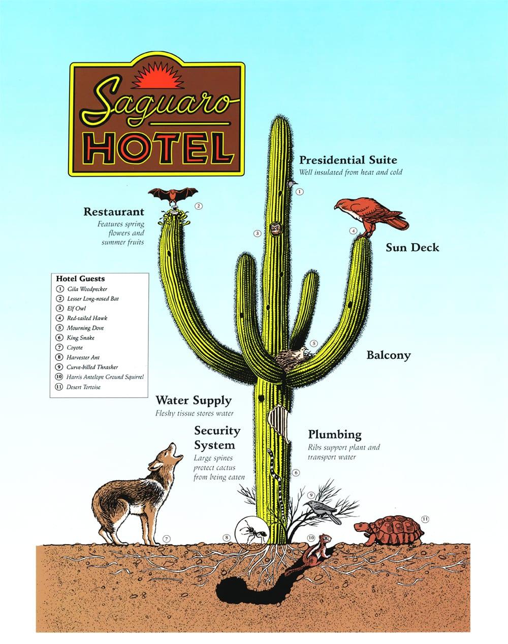 Desert Botanical Garden: Trail Signs