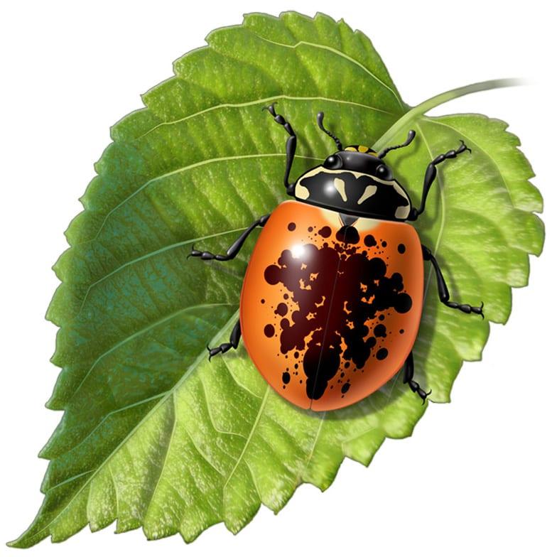Rorschach Lady bug