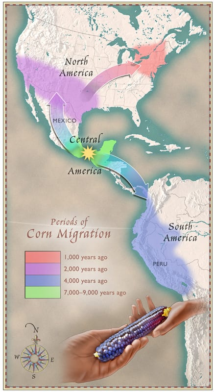 corn's journey to north america