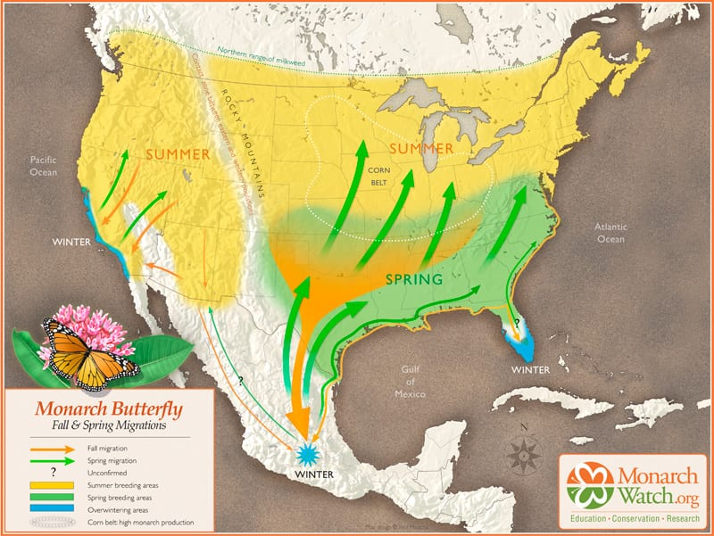 Where do Monarch Butterflies Go?