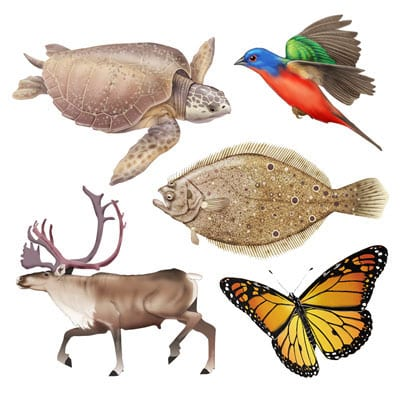 Animal icons for World Migration map