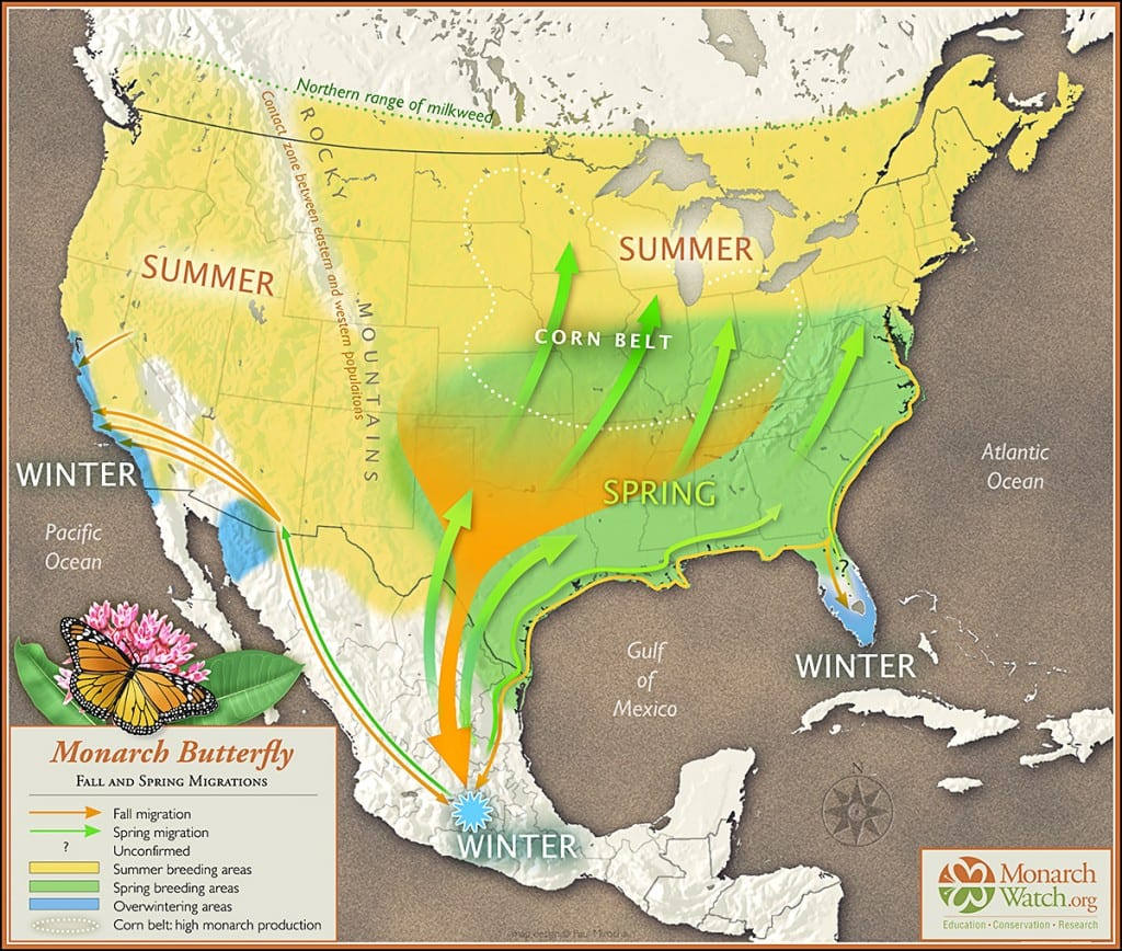 Monarch butterfly annual migration patterns. Map by Paul Mirocha