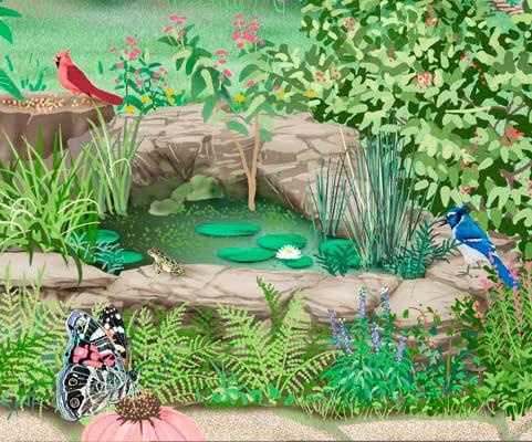 North Carolina wildlife-friendly backyard