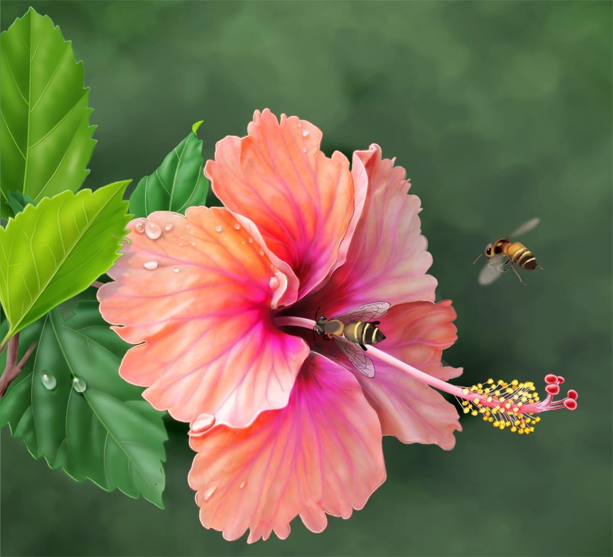 Hibiscus flower or bunga raya