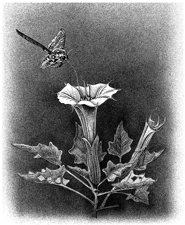 Honey, I Forgot the Pollinators
