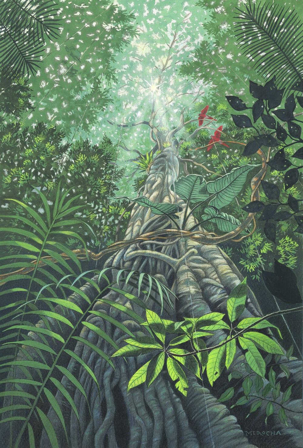 Rainforest Strangler Fig