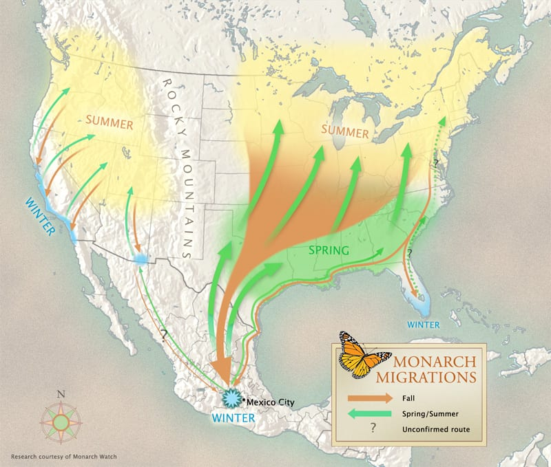 monarch_migration_map