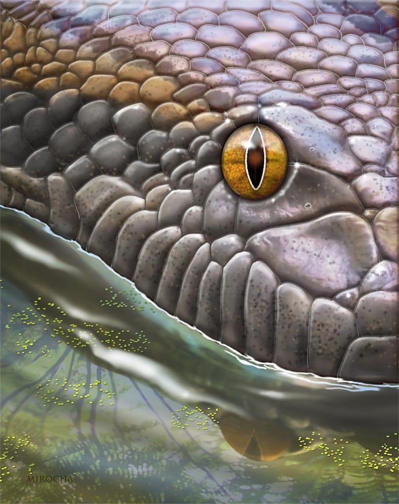 Titanoboa, tha largest snake in the world.
