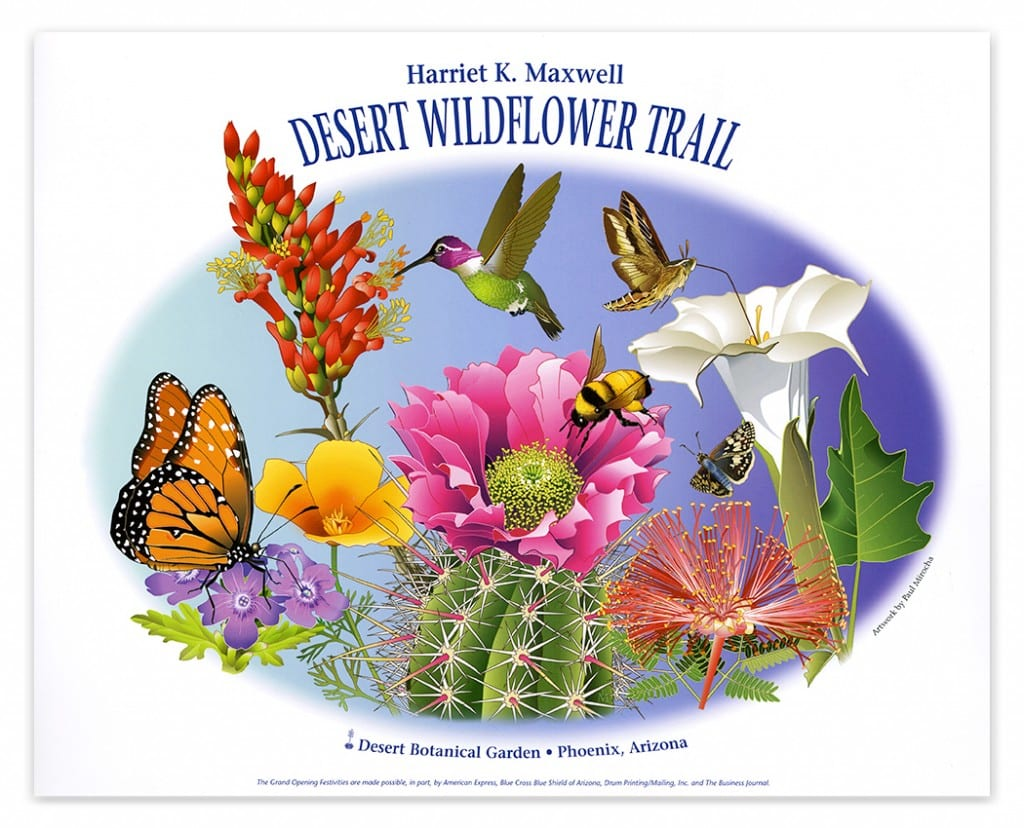Poster for opening of Harriet Maxwell Desert Wildflower Garden at the Desert Botanical Garden.