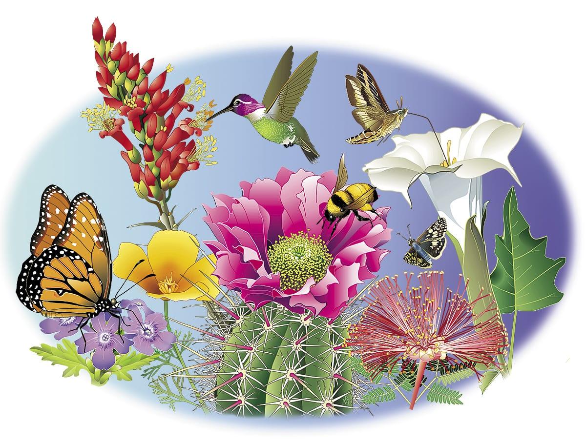 Sonoran Desert Wildflower Garden