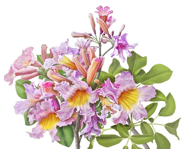 painting of pau d'arco flowers