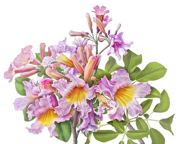 More Medicinal Plants