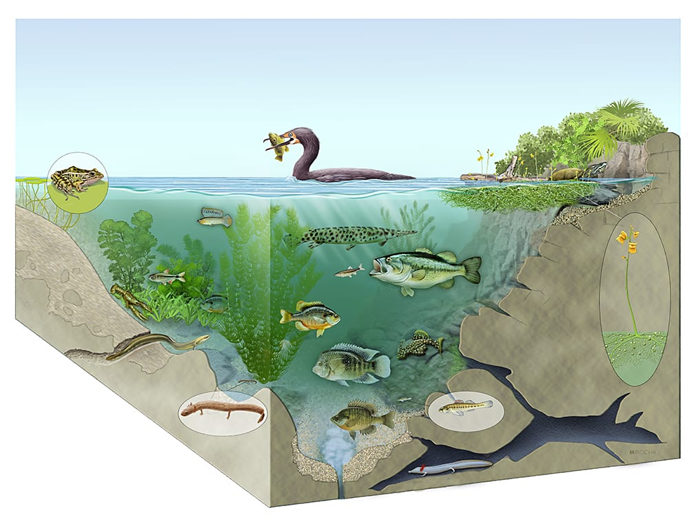 aquatic-environments