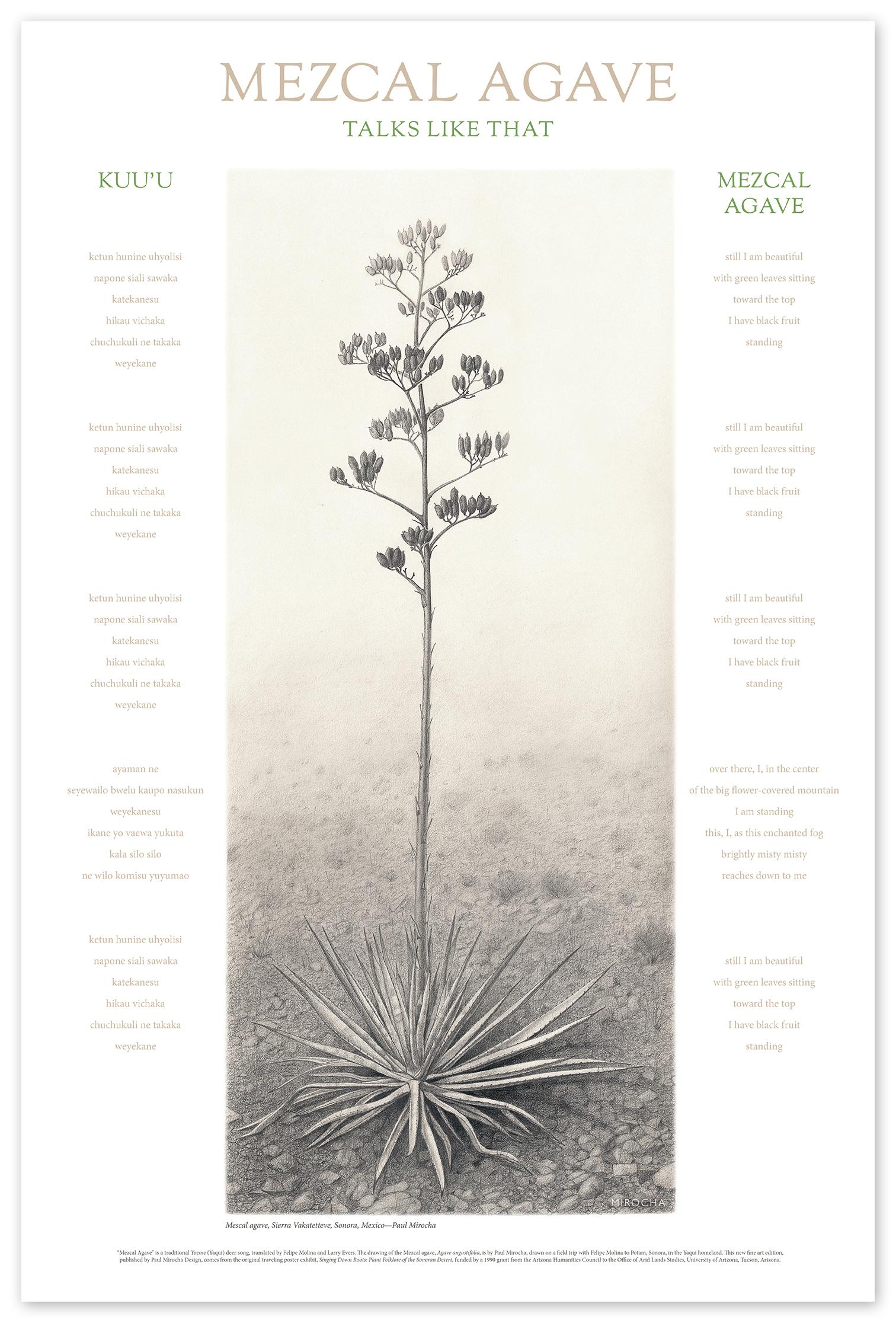 Mezcal agave