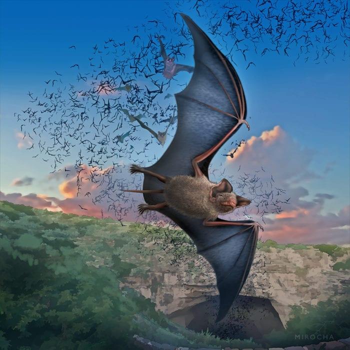 Bats at Carlsbad Caverns