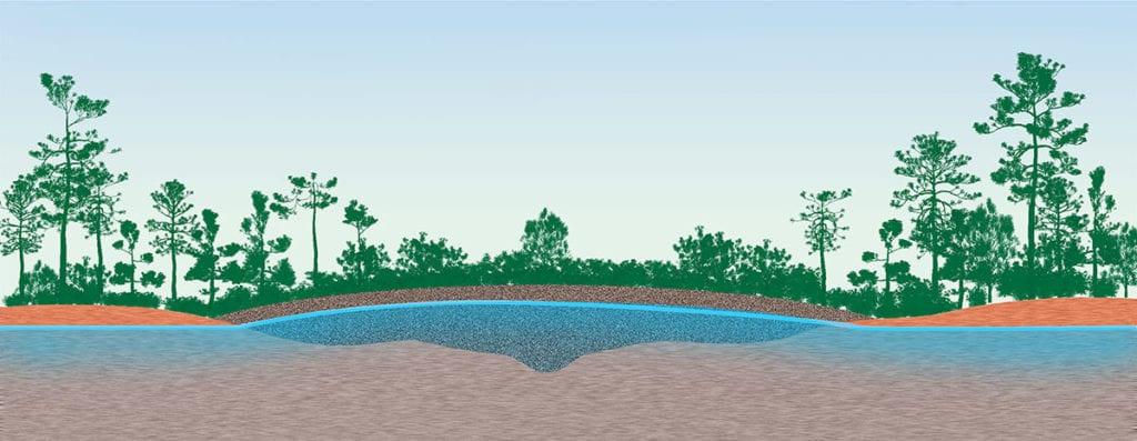 Pocosin environment: cross section