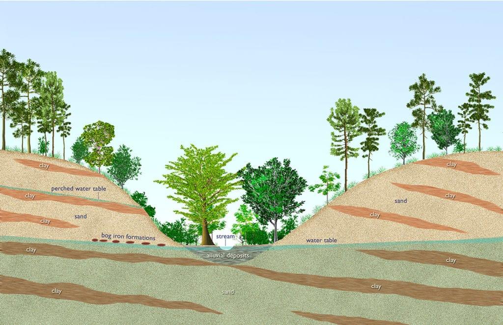 Sandhill cross section