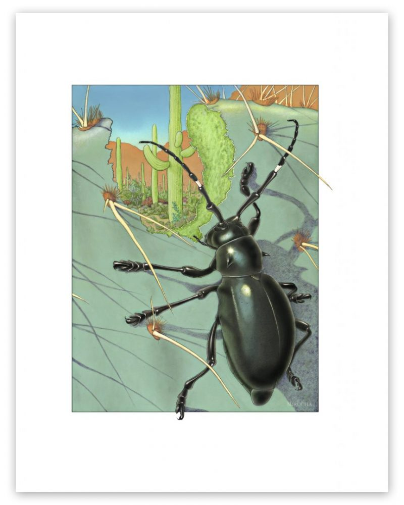 cactus longhorn beetle, art by Paul Mirocha