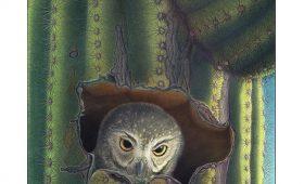 Elf owl in saguaro hole, illustration by Paul Mrocha