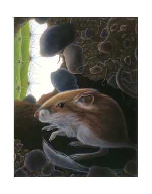 KAngaroo rat from Moon of teh WIld Pig, illustration by Paul Mirocha