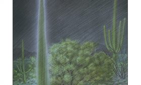 lightning strikes a saguaro