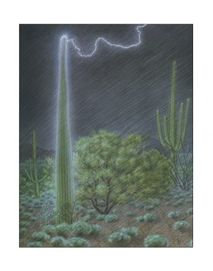 lightning strikes a saguaro