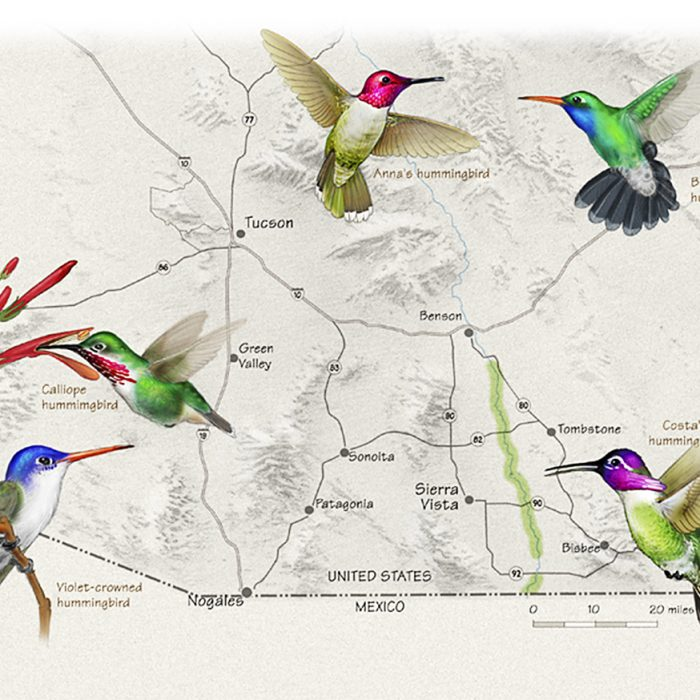 Hummingbirds of Southeast Arizona Map